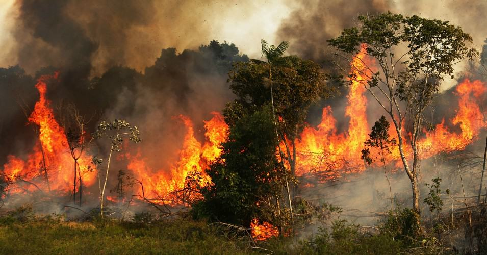 The Brazilian Amazon Rainforest is Burning With No End In Sight