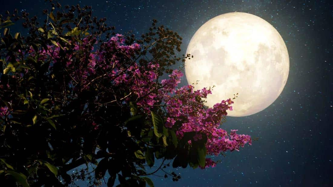 Pink Supermoon to light up Cyprus