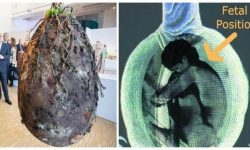 No More Coffins, Organic Burial Pods Will Turn Bodies Into Trees