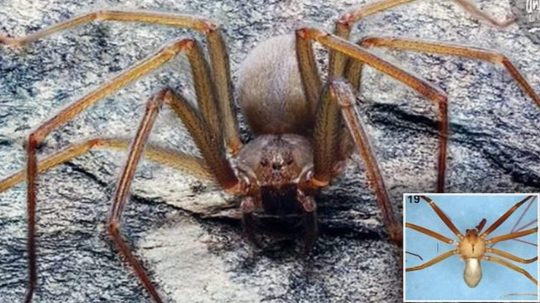 Permalink to Scientists Discover Spider With Venom That Will Rot Your Flesh In A Single Bite