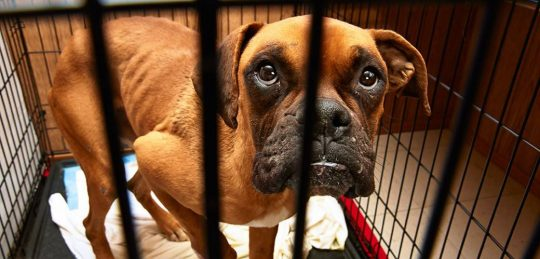 Permalink to New UK Bill Could Send Animal Abusers To Jail For 5 Years